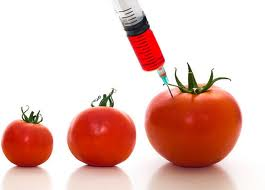 Photo of genetically altered tomatoes for possibly pear sauce post by charis freiman-mendel author of cook your way through the s.a.t.