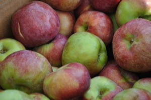 "Photo of apples for blog post, ""A Trip To The Farmer's Market,"" on www.SATgourmet.com, by author of Cook Your Way Through The S.A.T., Charis Freiman-Mendel."