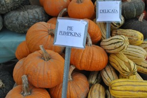"Photo of pumpkins for blog post, ""A Trip To The Farmer's Market,"" on www.SATgourmet.com, by author of Cook Your Way Through The S.A.T., Charis Freiman-Mendel."
